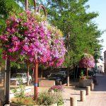 fleurs rue J-Jaures