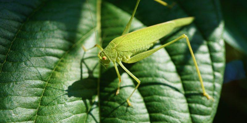C.Biodiv : un projet participatif pour recenser la faune et la flore de la métropole clermontoise !